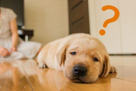 疑問符を浮かべ、寝そべっている犬