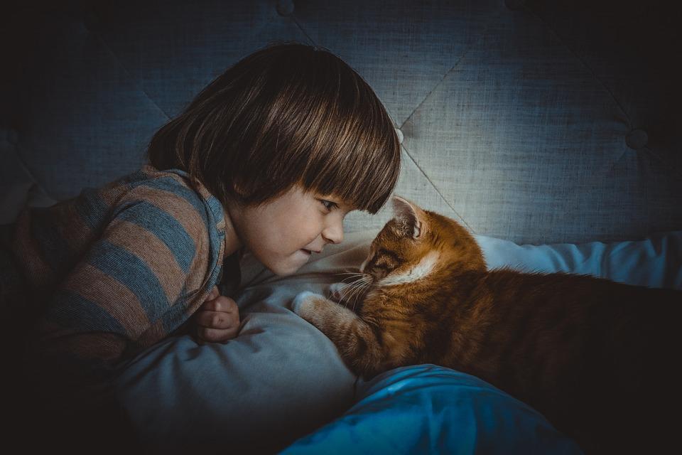 暗い部屋で子どもと猫が向き合っている