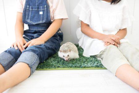 ハリネズミと子供たち