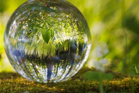 滴に写る木々
